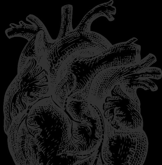 Anatomische Skizze eines Herzens